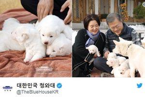 Tổng thống Hàn Quốc khoe đàn chó được Nhà lãnh đạo Triều Tiên tặng