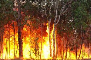 Australia ban bố tình trạng khẩn cấp do cháy rừng tại Queensland