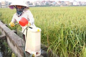 Hàng rào kỹ thuật ngăn dừa sang Trung Quốc, chuối sang Philippines