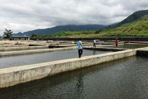 Nuôi cá tầm trái phép quy mô lớn đầu nguồn suối Ea Krông Bông