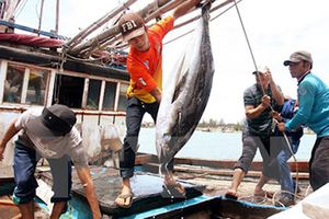 Thí điểm đưa lao động sang Thái Lan đánh bắt cá
