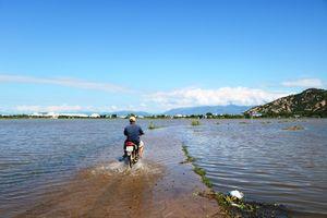 Nông dân Ninh Thuận bì bõm lội nước, thu hoạch trái cây để 'bán đổ bán tháo'