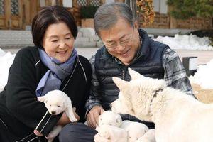 Tổng thống Hàn Quốc 'khoe' món quà quốc khuyển từ Triều Tiên