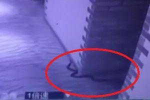 'Yêu râu xanh' dùng rắn độc đe dọa và cưỡng hiếp nạn nhân, cuối cùng bị cắn chết