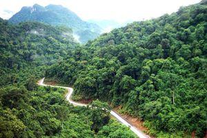Thí điểm chi trả dịch vụ hấp thu và lưu trữ carbon của rừng