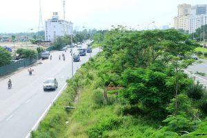 Cần cắt tỉa cỏ cây gây khuất tầm nhìn dọc đường gom Đại lộ Thăng Long