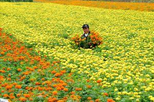 Chùm ảnh: Đắm đuối giữa vựa hoa nổi tiếng nhất vùng đất 'Chín Rồng'