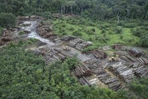 Brazil thông báo hủy đăng cai COP25