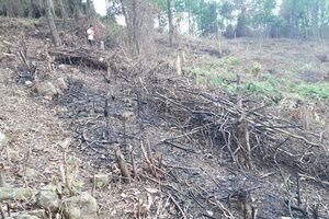 Tiếng kêu cứu từ những cánh rừng Quảng Trị