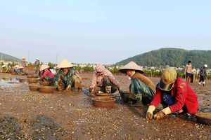 Nghệ An: Cá, ngao chết hàng loạt chưa rõ nguyên nhân