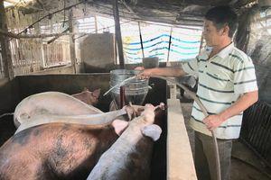 Điện Biên: Xử lý ô nhiễm môi trường trong chăn nuôi – còn nhiều trăn trở