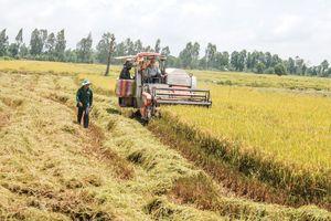 Phát triển 'Cánh đồng lớn', sản xuất lúa chất lượng cao