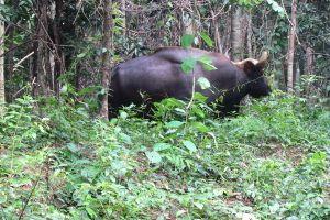 Việt Nam xếp thứ 2 Đông Nam Á về khu dự trữ sinh quyển