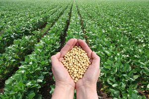 Diễn biến trái chiều tại thị trường nông sản ngày 28/11