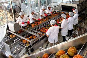 Việt Nam đứng thứ 15 thế giới về kim ngạch xuất khẩu nông sản