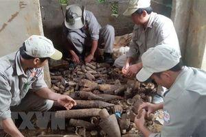 Phát hiện gần 1.000 vật liệu nổ sau chiến tranh trong nhà dân