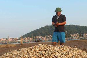 Nghệ An: Lấy mẫu nước kiểm tra nguyên nhân hải sản chết hàng loạt
