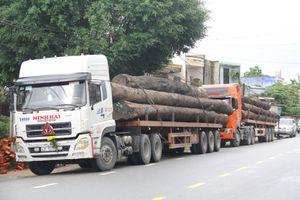 Bắt 4 xe container chở gỗ lớn lưu thông trên quốc lộ 1A