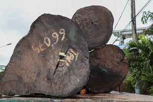 Phát hiện 4 xe đầu kéo chở hàng trăm tấn gỗ không rõ nguồn gốc