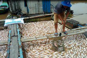Hỗ trợ người dân 12 tỷ đồng do thiệt hại cá chết trên sông La Ngà