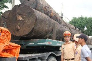 Cảnh sát tạm giữ hàng chục cây gỗ khủng đang 'bon bon' trên QL1A