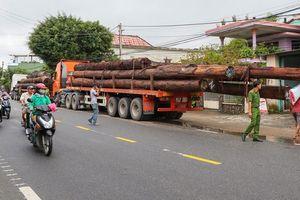 Không có giấy tờ, 4 xe container chở cả trăm mét khối gỗ khủng bị bắt giữ