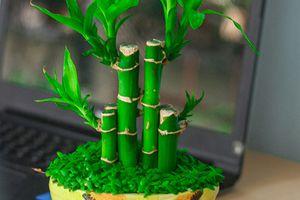 5 loại cây phong thủy đặt trong nhà để rước thần tài
