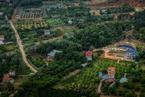 Phó Thủ tướng yêu cầu thanh tra toàn diện việc quản lý đất rừng Sóc Sơn