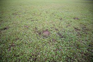 Cận cảnh sân Panaad: 'Ổ gà, ổ trâu' khắp nơi, mưa to là ngập