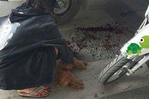 Thấy chú chó cưng bất ngờ lao xuống đường bị xe cán chết, cô gái trẻ gào khóc mắng chửi tài xế 'có mắt như mù'