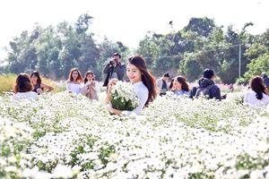 Điểm danh những địa chỉ mới để chụp ảnh với cúc họa mi đẹp nhất ở Hà Nội không phải ai cũng biết