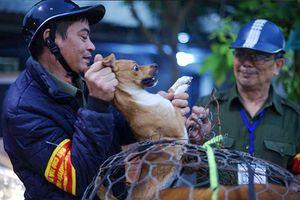 Theo chân đội săn bắt dùng vợt tóm sống chó thả rông ở Hà Nội từ sáng sớm
