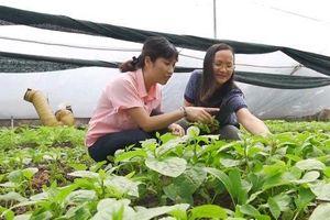 Thạc sĩ hóa học Nguyễn Thị Quỳnh Viên học bỏ giảng đường gây dựng giấc mơ rau