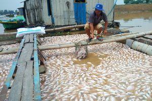 Hỗ trợ gần 12,3 tỷ đồng trong vụ cá bè chết hàng loạt trên sông La Ngà