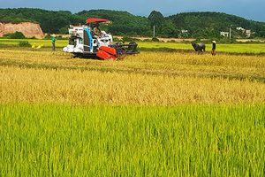 Thực hiện Nghị quyết 'Tam nông': Tạo diện mạo mới cho nông thôn Đầm Hà