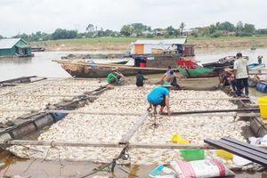 Hỗ trợ trên 12 tỷ đồng cho người nuôi cá bè trên sông La Ngà