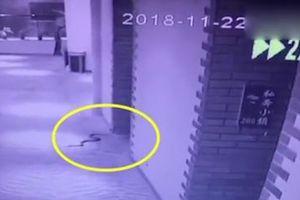 Dùng rắn độc đe dọa cưỡng hiếp cô gái, thủ phạm bị cắn chết