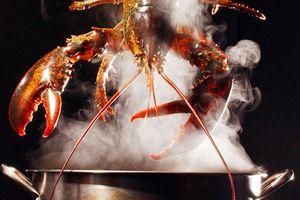 Vì sao Thụy Sĩ cấm luộc tôm hùm còn sống?