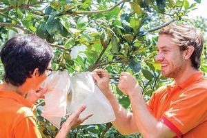 Trái cây tươi xuất khẩu đi châu Âu, không ... quá khó!