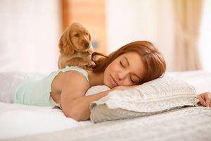 Phụ nữ ngủ ngon hơn khi ngủ cùng ... chó