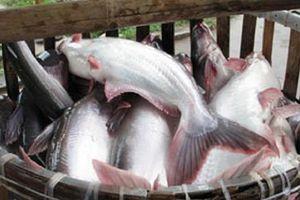 Thủy sản Mekong đã mua lại 1,9 triệu cổ phiếu quỹ