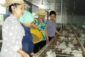 Nhờ tín dụng chính sách, Triệu Sơn phá thế thuần nông