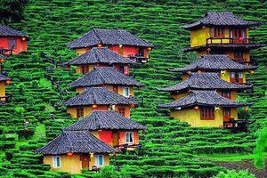 Hút mắt những đồi chè xanh, đẹp như bích họa