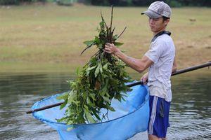 Độc chiêu thả lá cây bắt tôm tép
