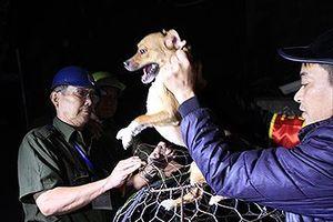 Bắt chó thả rông ở Hà Nội: Chủ chó nói gì?