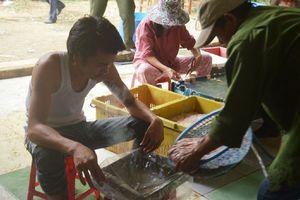 Đà Nẵng quyết liệt ngăn chặn thực phẩm bẩn