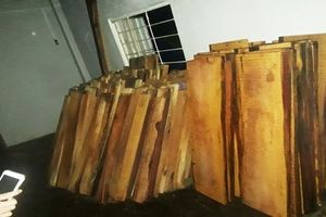 Tổng giám đốc thủy điện giấu gỗ lậu trong nhà điều hành