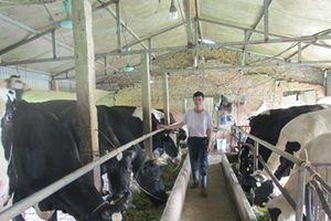 Bí quyết của lão nông nuôi 60 con bò sữa, thu nhập 1,4 tỷ đồng/năm