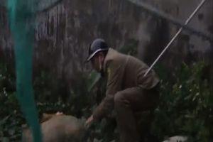 Clip: Hà Nội ra quân đội bắt chó thả rông