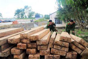 Triệt phá nhóm lâm tặc khai thác gỗ trái phép